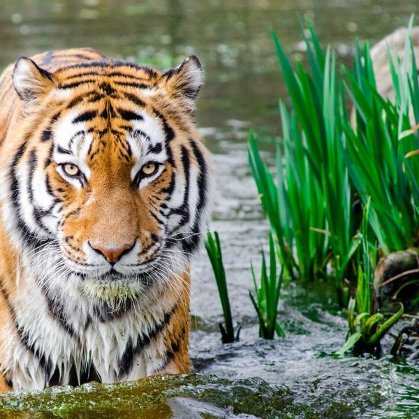 SpinifexIT case study - Wildlife Conservation Society Payroll reporting